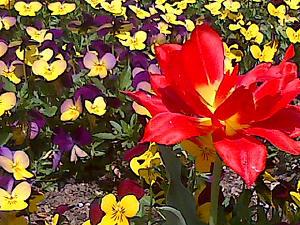 Eine Blume beim DENKMAL